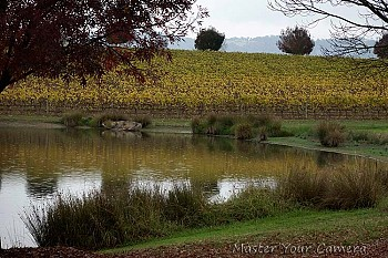 Vineyard in Autumn